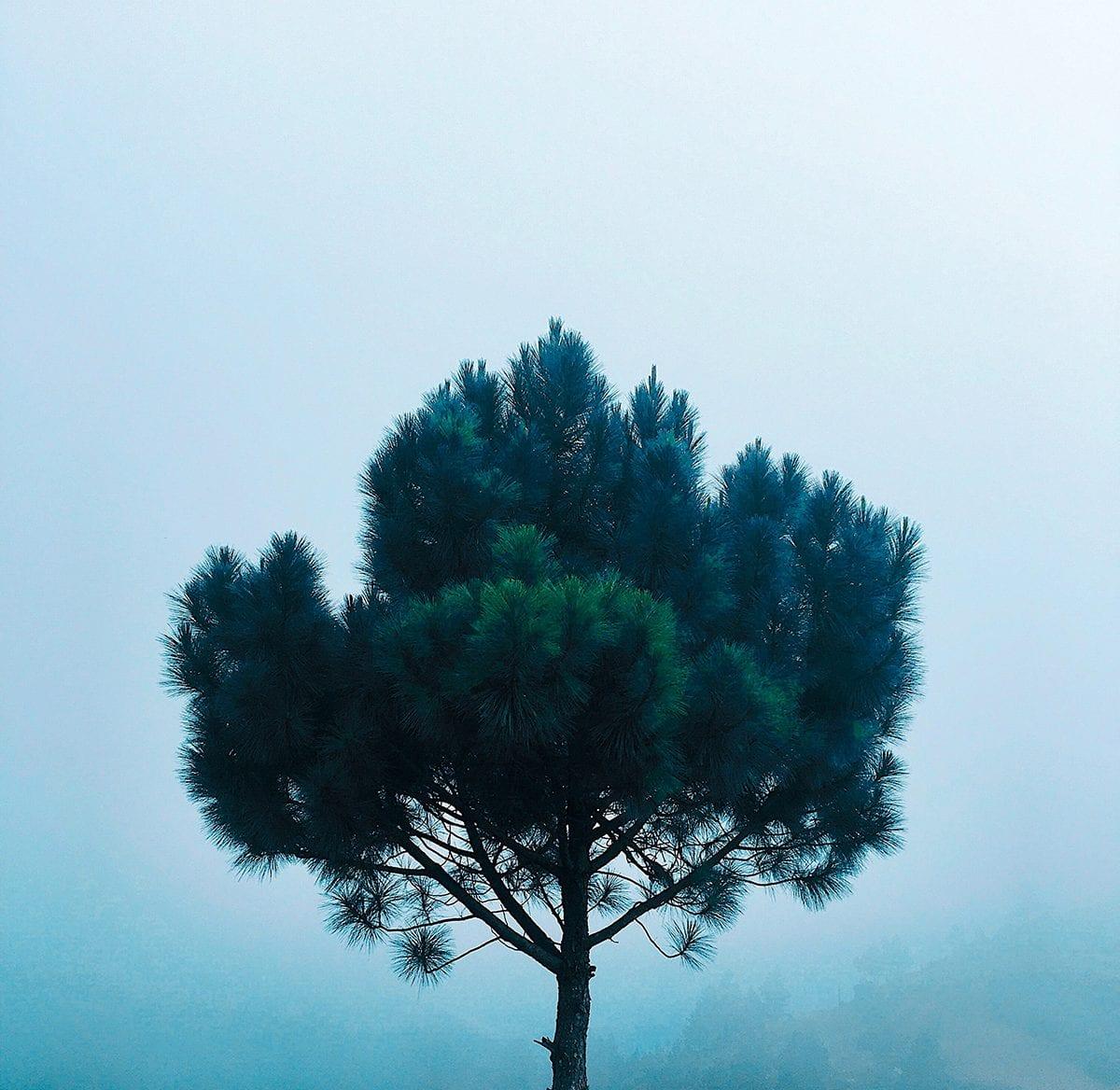 Árboles grises - Mérida Miranda